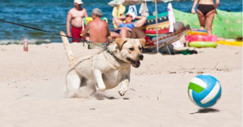 cane-in-spiaggia