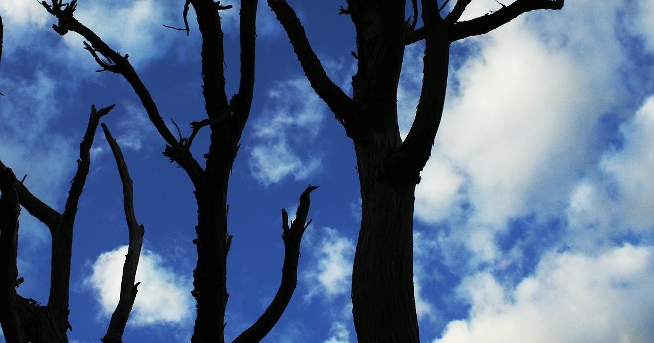 alberi-bacheca