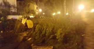 Alberi pericolosi, cade un pino in via Scarfoglio