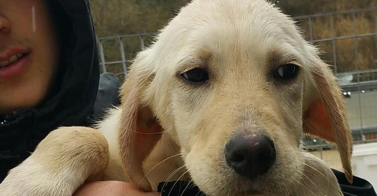 Uno dei tanti cani ospiti al canile di Chieti
